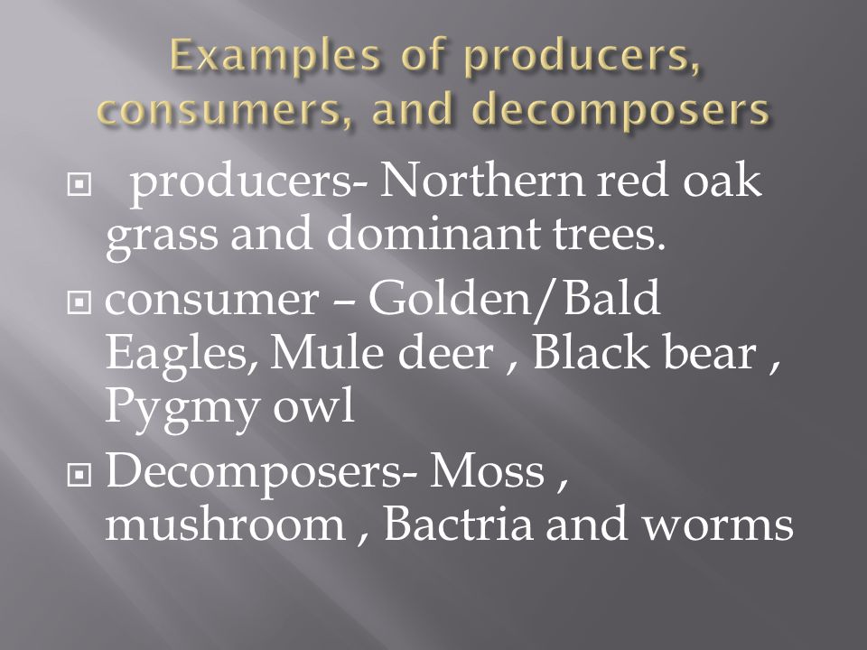  producers- Northern red oak grass and dominant trees.