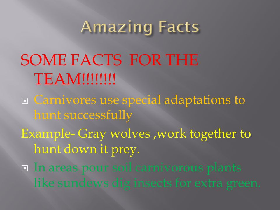 SOME FACTS FOR THE TEAM!!!!!!!.