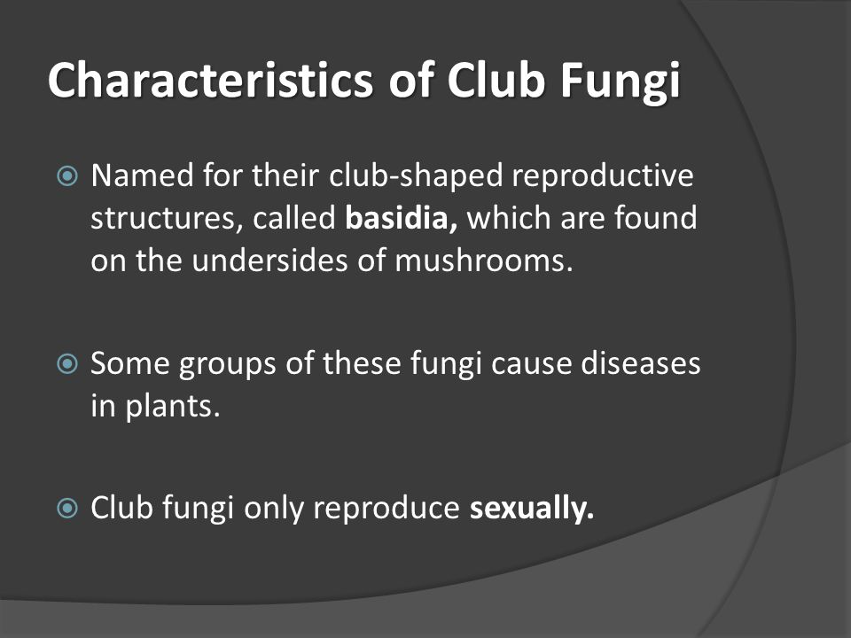 Characteristics of Club Fungi  Named for their club-shaped reproductive structures, called basidia, which are found on the undersides of mushrooms. 