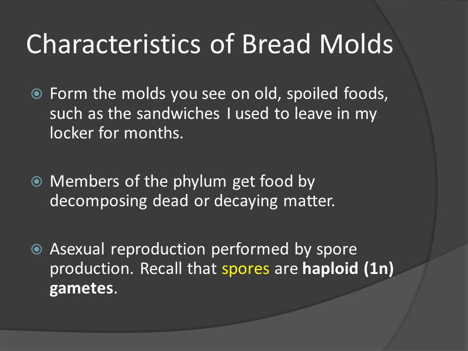 Characteristics of Bread Molds  Form the molds you see on old, spoiled foods, such as the sandwiches I used to leave in my locker for months.  Membe
