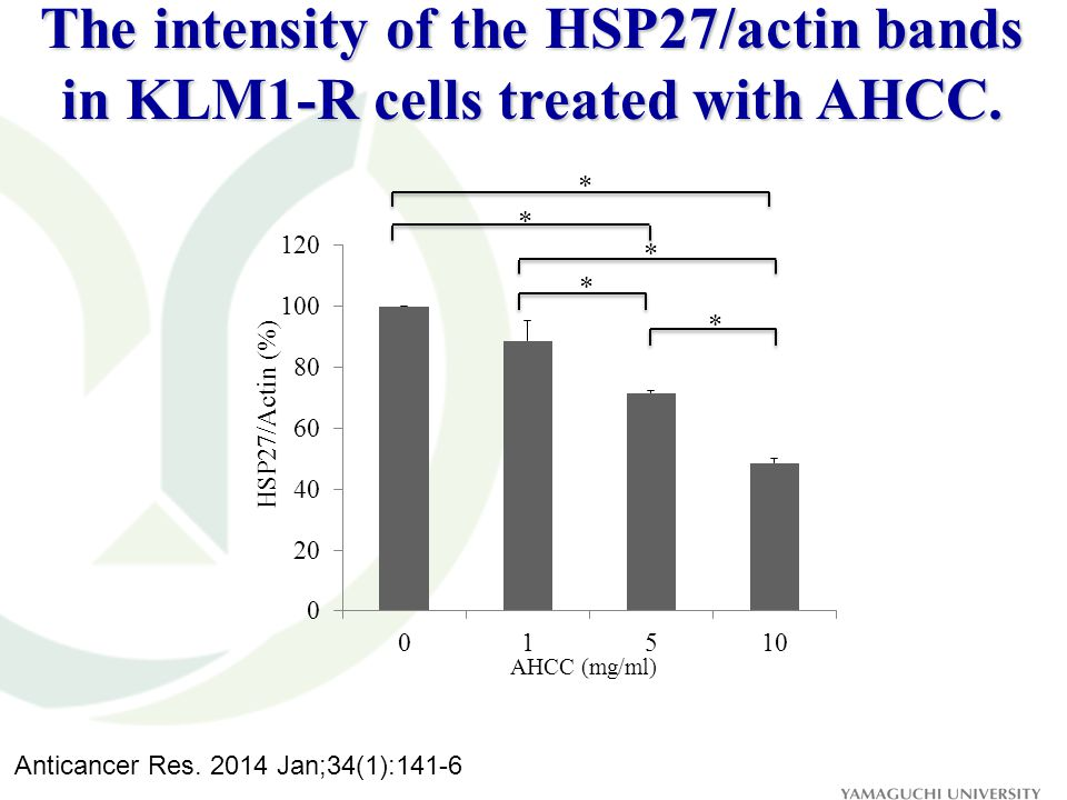 AHCC (mg/ml) HSP27/Actin (%) * * * * * The intensity of the HSP27/actin bands in KLM1-R cells treated with AHCC. Anticancer Res. 2014 Jan;34(1):141-6