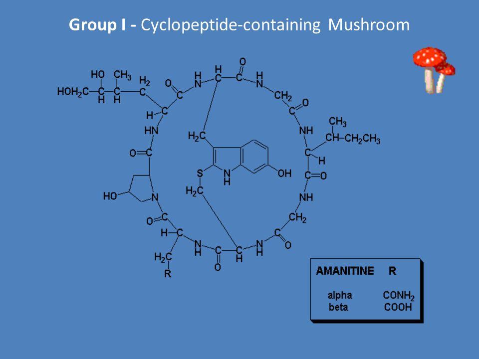 Group I - Cyclopeptide-containing Mushroom