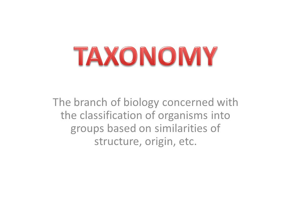 The branch of biology concerned with the classification of organisms into groups based on similarities of structure, origin, etc.