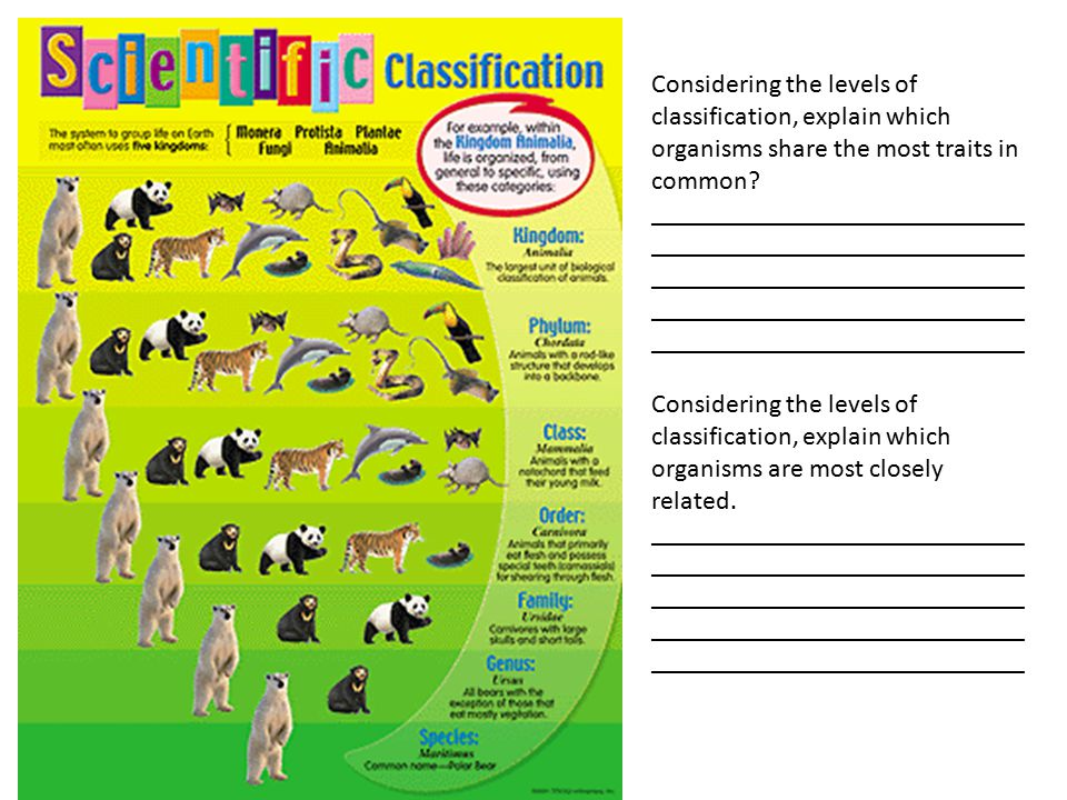 Considering the levels of classification, explain which organisms share the most traits in common.