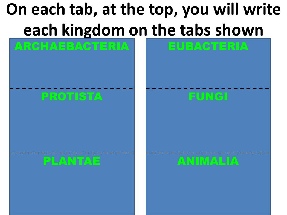 On each tab, at the top, you will write each kingdom on the tabs shown ARCHAEBACTERIA FUNGI ANIMALIAPLANTAE PROTISTA EUBACTERIA