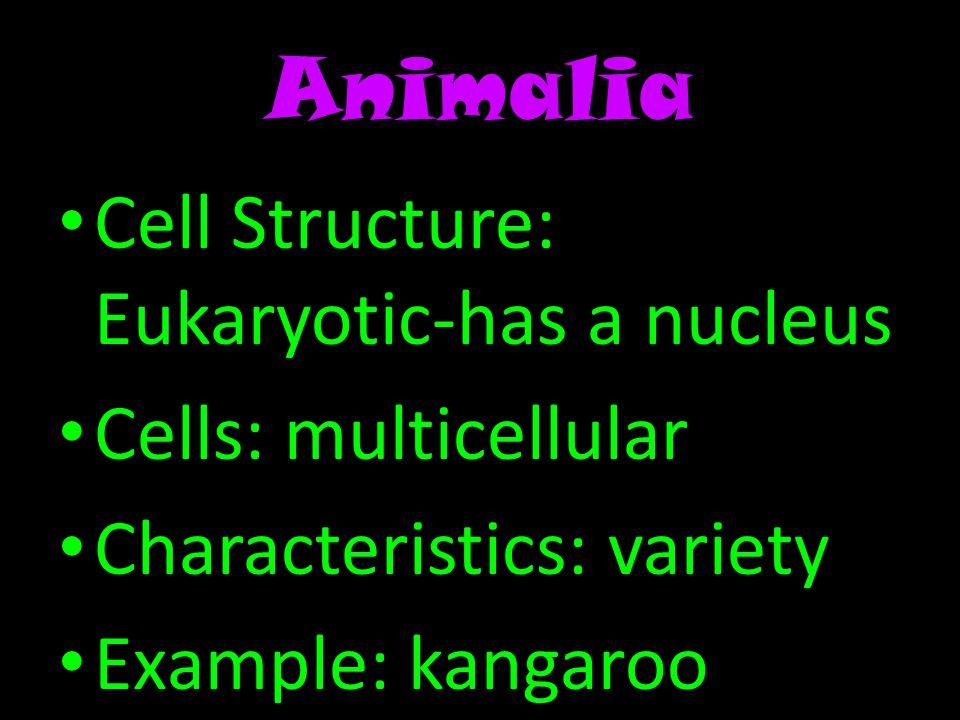 Animalia Cell Structure: Eukaryotic-has a nucleus Cells: multicellular Characteristics: variety Example: kangaroo