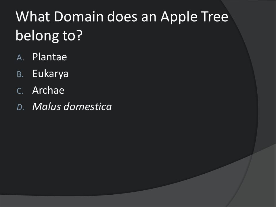 What Domain does an Apple Tree belong to? A. Plantae B. Eukarya C. Archae D. Malus domestica