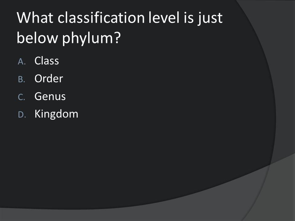 What classification level is just below phylum? A. Class B. Order C. Genus D. Kingdom