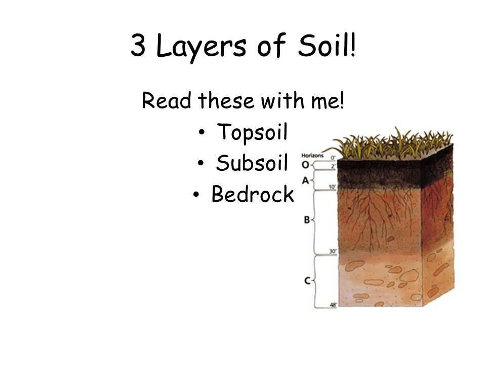 Topsoil This is the top layer.It is where animals live and plants grow.