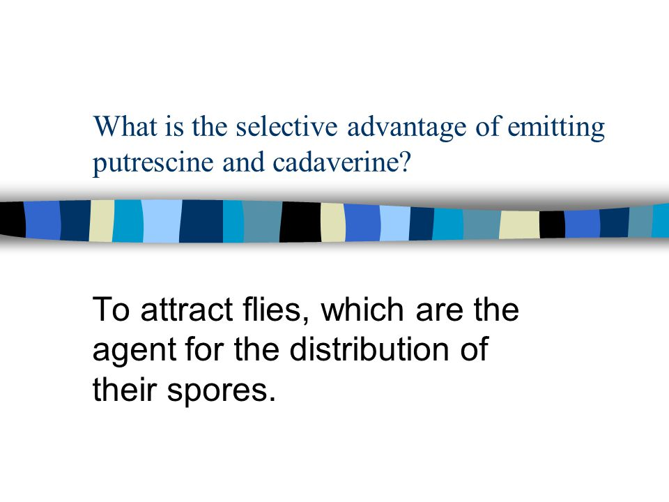 What is the selective advantage of emitting putrescine and cadaverine? To attract flies, which are the agent for the distribution of their spores.