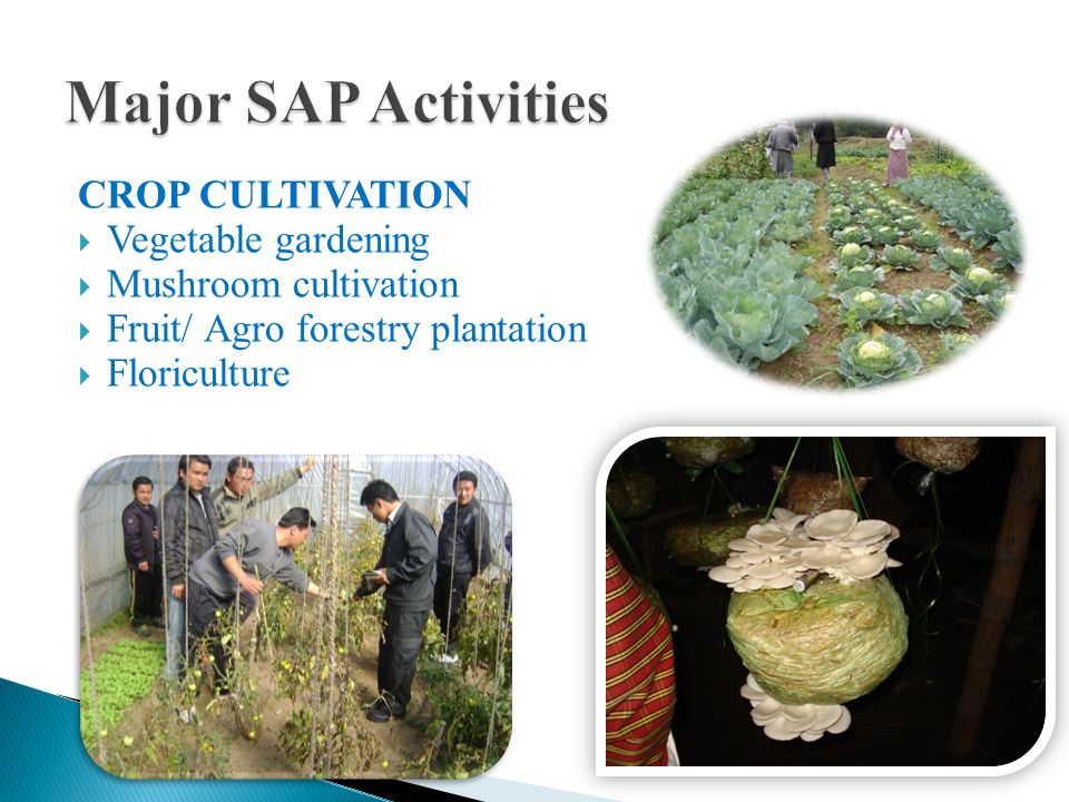 CROP CULTIVATION VVegetable gardening MMushroom cultivation FFruit/ Agro forestry plantation FFloriculture