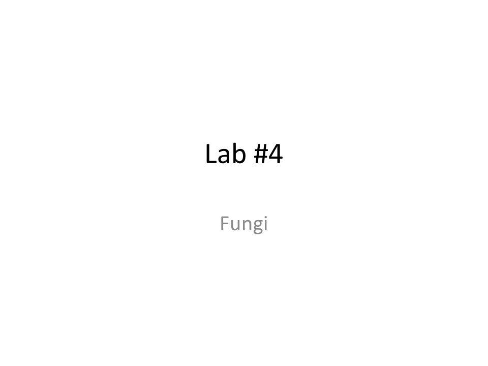 Lab #4 Fungi