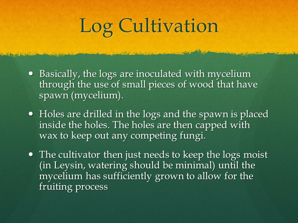 Log Cultivation Basically, the logs are inoculated with mycelium through the use of small pieces of wood that have spawn (mycelium).
