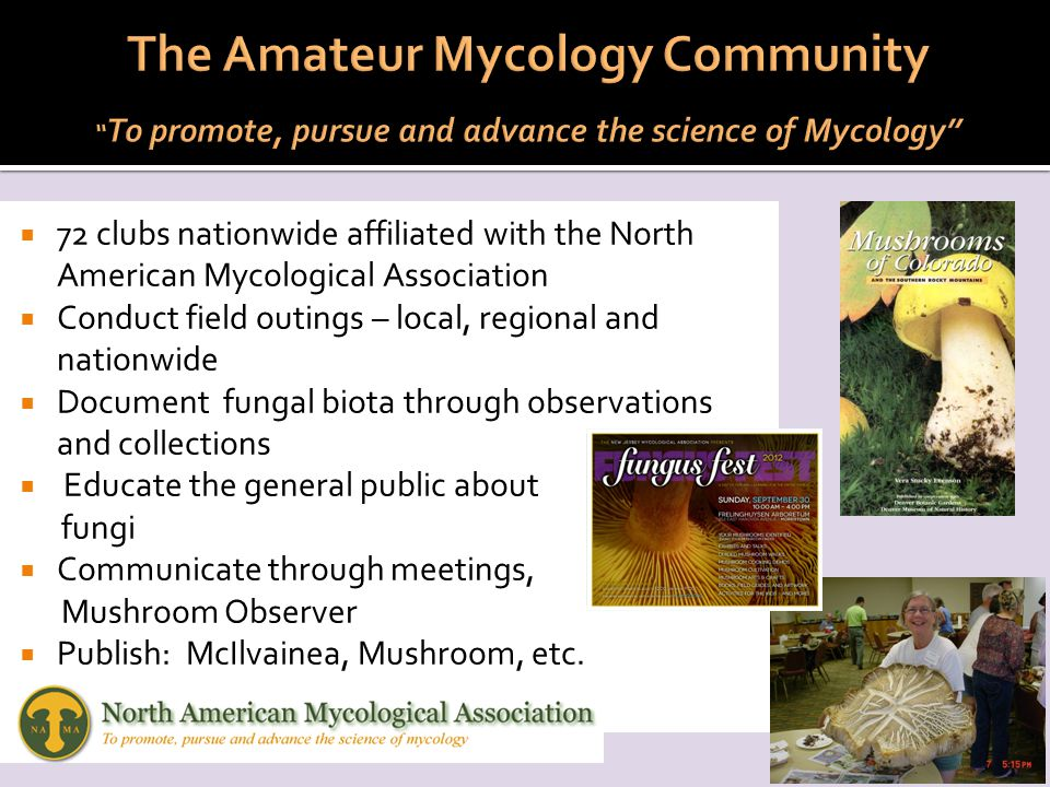  72 clubs nationwide affiliated with the North American Mycological Association  Conduct field outings – local, regional and nationwide  Document fungal biota through observations and collections  Educate the general public about fungi  Communicate through meetings, Mushroom Observer  Publish: McIlvainea, Mushroom, etc.