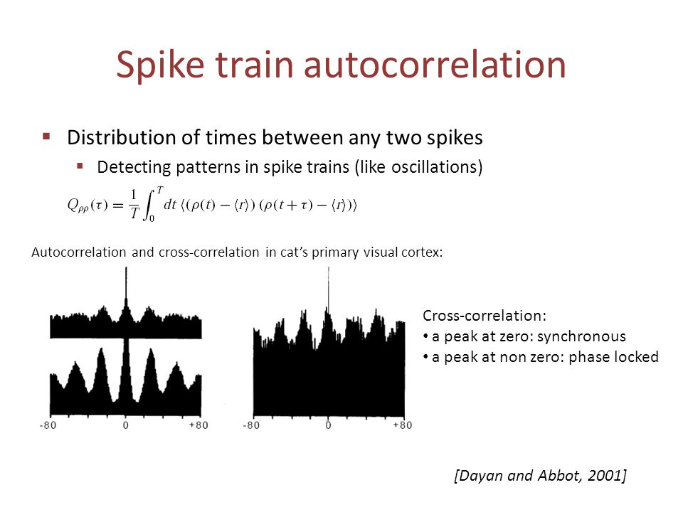 Spike train autocorrelation  Distribution of times between any two spikes  Detecting patterns in spike trains (like oscillations) Autocorrelation an