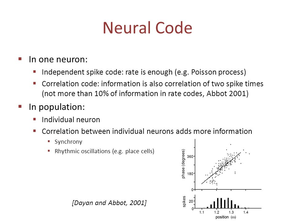 Neural Code  In one neuron:  Independent spike code: rate is enough (e.g. Poisson process)  Correlation code: information is also correlation of tw