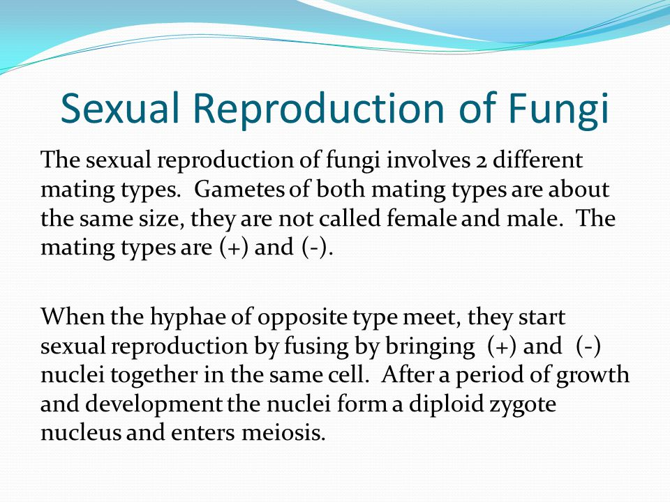 Sexual Reproduction of Fungi The sexual reproduction of fungi involves 2 different mating types. Gametes of both mating types are about the same size,