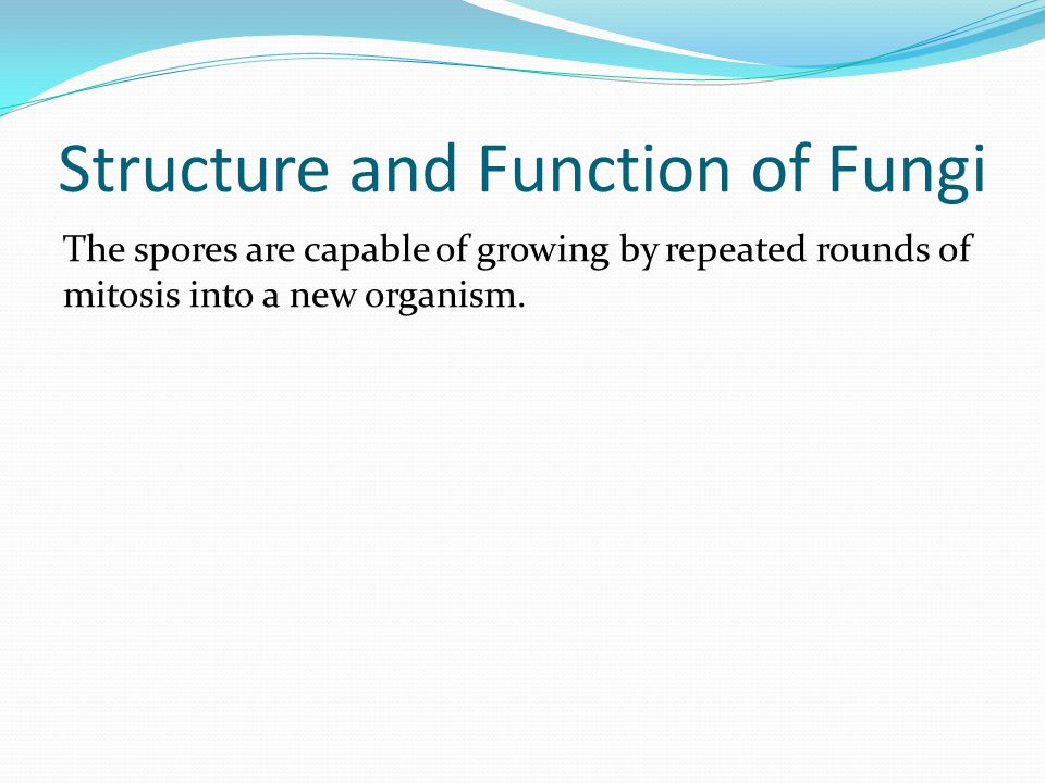 Structure and Function of Fungi The spores are capable of growing by repeated rounds of mitosis into a new organism.