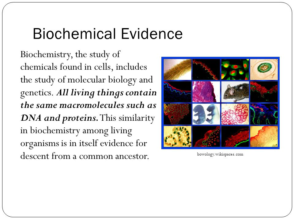Biochemical Evidence Biochemistry, the study of chemicals found in cells, includes the study of molecular biology and genetics.