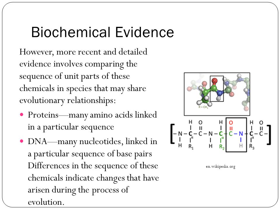 Biochemical Evidence However, more recent and detailed evidence involves comparing the sequence of unit parts of these chemicals in species that may share evolutionary relationships: Proteins—many amino acids linked in a particular sequence DNA—many nucleotides, linked in a particular sequence of base pairs Differences in the sequence of these chemicals indicate changes that have arisen during the process of evolution.