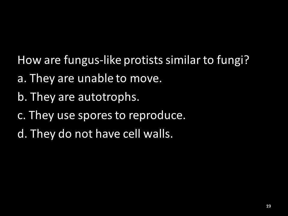 How are fungus-like protists similar to fungi. a.