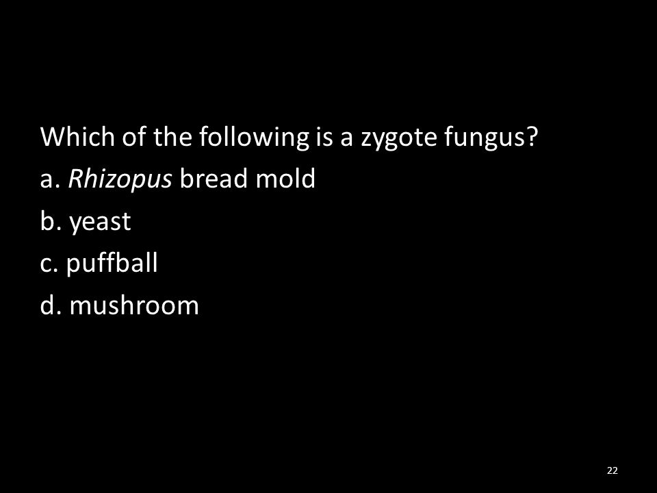 Which of the following is a zygote fungus. a. Rhizopus bread mold b.