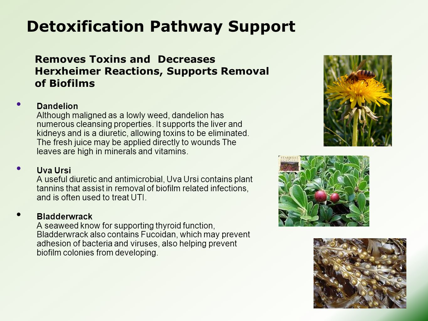 Detoxification Pathway Support Dandelion Although maligned as a lowly weed, dandelion has numerous cleansing properties.
