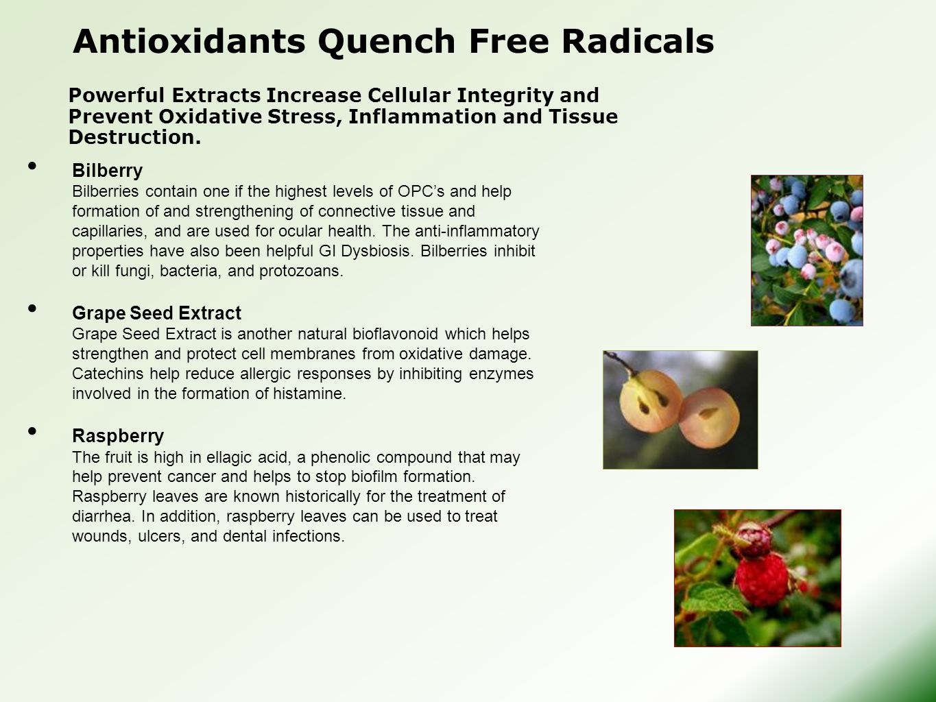 Antioxidants Quench Free Radicals Bilberry Bilberries contain one if the highest levels of OPC's and help formation of and strengthening of connective tissue and capillaries, and are used for ocular health.