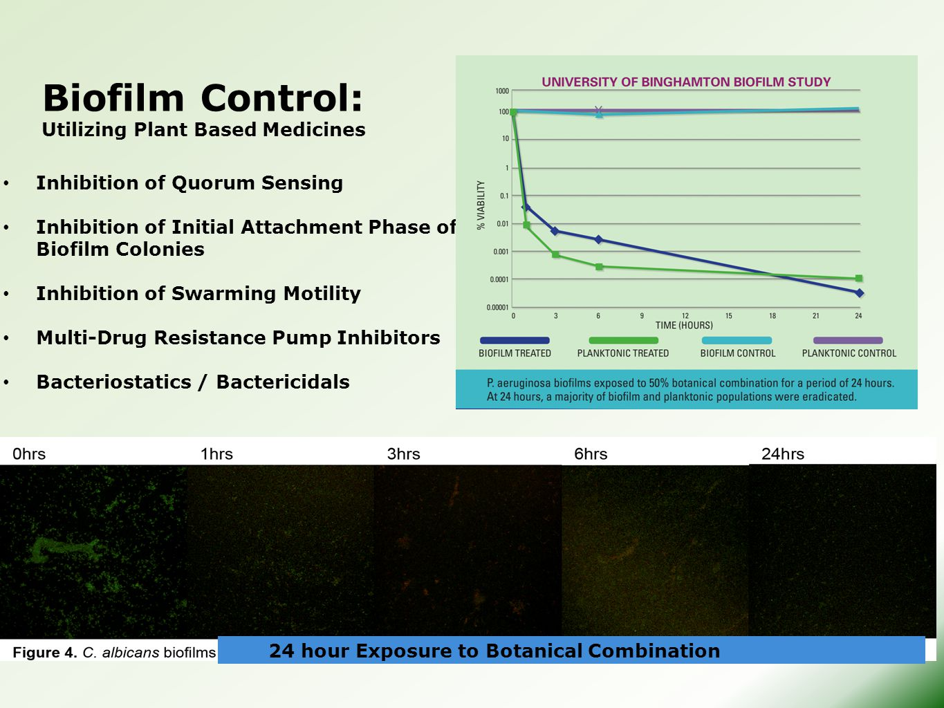Biofilm Control: Utilizing Plant Based Medicines Inhibition of Quorum Sensing Inhibition of Initial Attachment Phase of Biofilm Colonies Inhibition of Swarming Motility Multi-Drug Resistance Pump Inhibitors Bacteriostatics / Bactericidals 24 hour Exposure to Botanical Combination