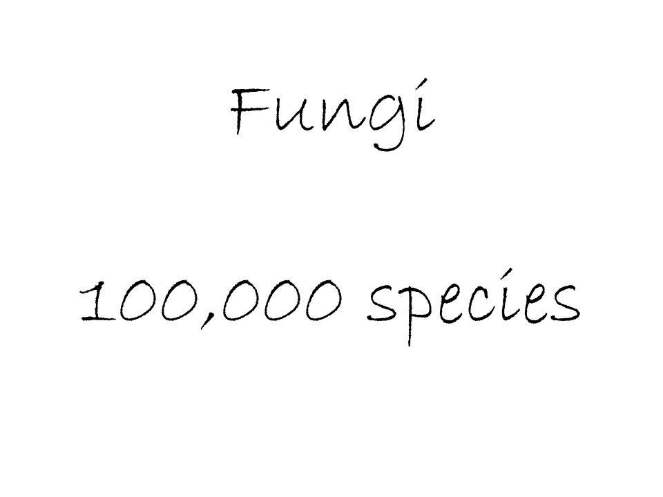 Fungi 100,000 species