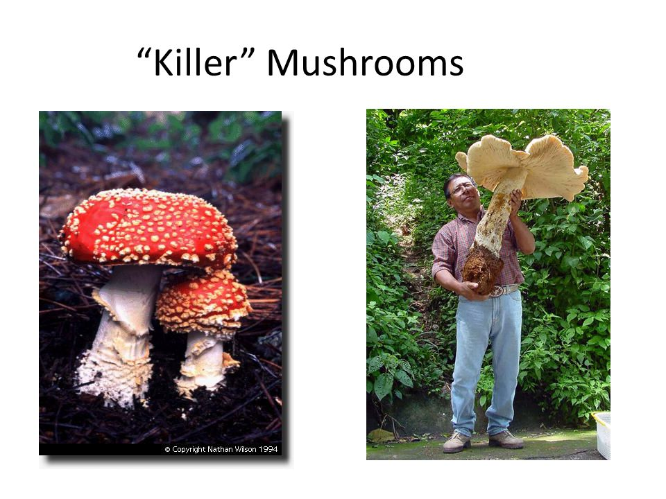Killer Mushrooms