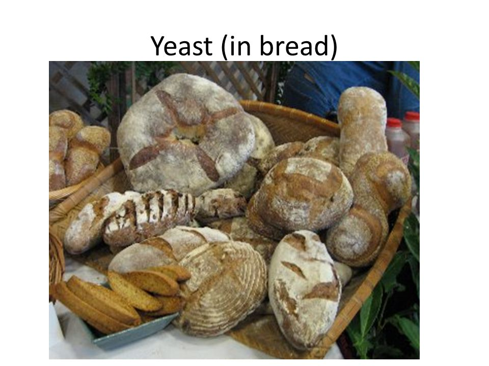 Yeast (in bread)