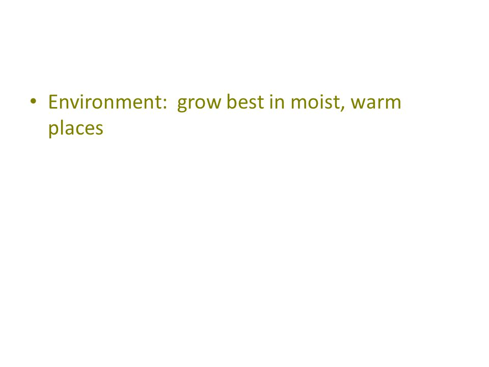 Environment: grow best in moist, warm places