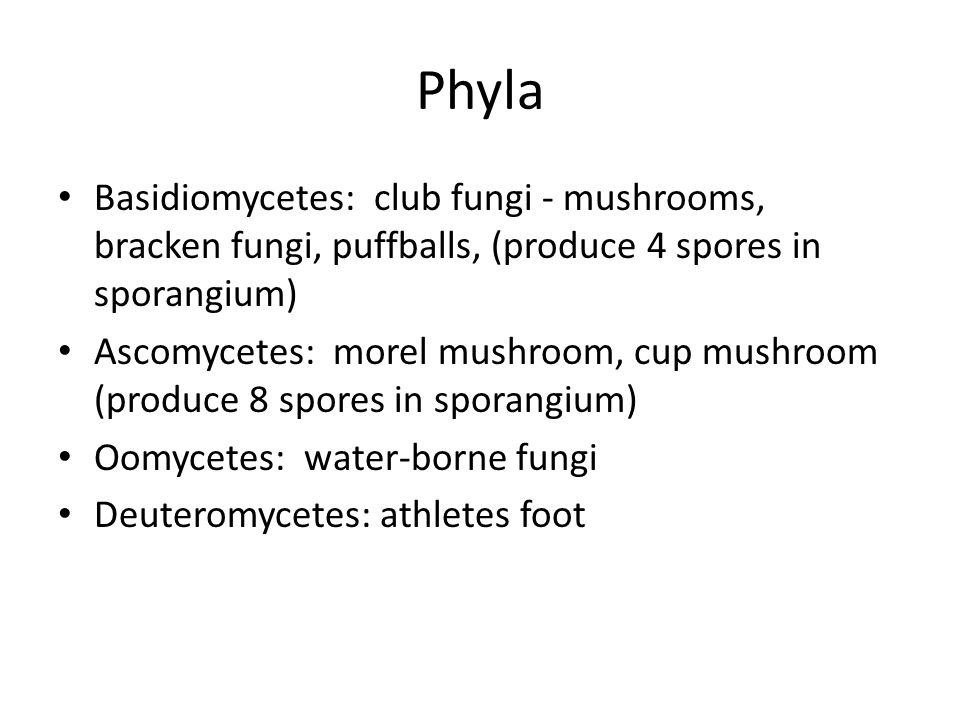 Phyla Basidiomycetes: club fungi - mushrooms, bracken fungi, puffballs, (produce 4 spores in sporangium) Ascomycetes: morel mushroom, cup mushroom (produce 8 spores in sporangium) Oomycetes: water-borne fungi Deuteromycetes: athletes foot