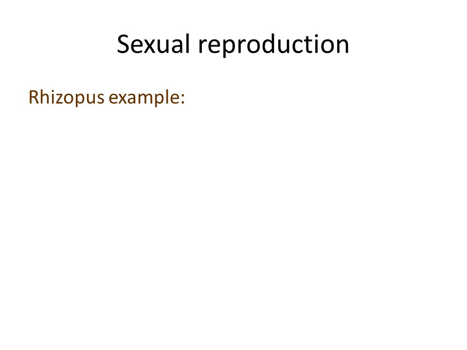Sexual reproduction Rhizopus example: