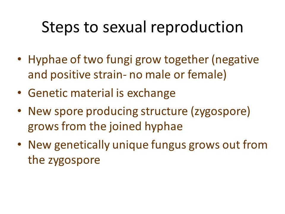 Steps to sexual reproduction Hyphae of two fungi grow together (negative and positive strain- no male or female) Genetic material is exchange New spore producing structure (zygospore) grows from the joined hyphae New genetically unique fungus grows out from the zygospore