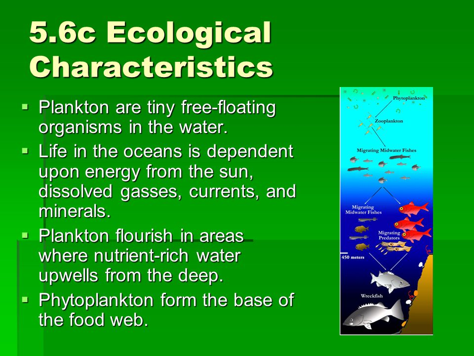 5.6c Ecological Characteristics  Plankton are tiny free-floating organisms in the water.  Life in the oceans is dependent upon energy from the sun,