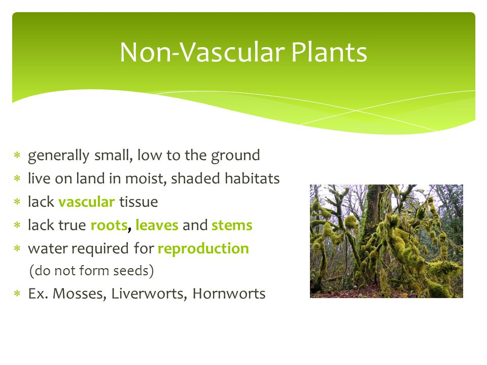  generally small, low to the ground  live on land in moist, shaded habitats  lack vascular tissue  lack true roots, leaves and stems  water requi