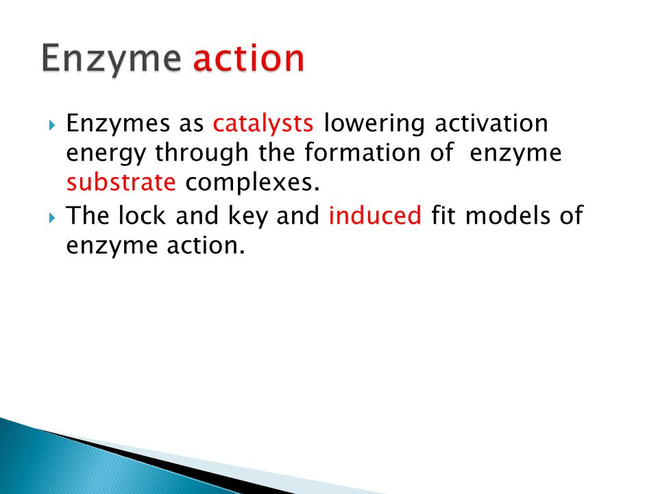  Enzymes as catalysts lowering activation energy through the formation of enzyme substrate complexes.  The lock and key and induced fit models of en