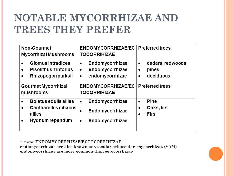 NOTABLE MYCORRHIZAE AND TREES THEY PREFER Non-Gourmet Mycorrhizal Mushrooms ENDOMYCORRHIZAE/EC TOCORRIHIZAE Preferred trees  Glomus intradices  Pisolithus Tintorius  Rhizopogon parksii  Endomycorrhizae  endomycorrhizae  cedars, redwoods  pines  deciduous Gourmet Mycorrhizal mushrooms ENDOMYCORRHIZAE/EC TOCORRIHIZAE Preferred trees  Boletus edulis allies  Cantharellus cibarius allies  Hydnum repandum  Endomycorrhizae  Pine  Oaks, firs  Firs * note: ENDOMYCORRHIZAE/ECTOCORRIHIZAE endomycorrhizae are also known as vescular-arbuscular mycorrhizae (VAM) endomycorrhizae are more common than ectocorrhizae