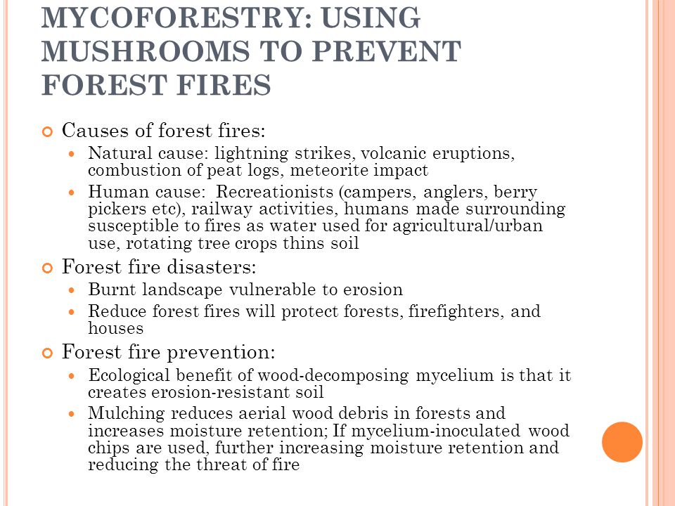 MYCOFORESTRY: USING MUSHROOMS TO PREVENT FOREST FIRES Causes of forest fires: Natural cause: lightning strikes, volcanic eruptions, combustion of peat