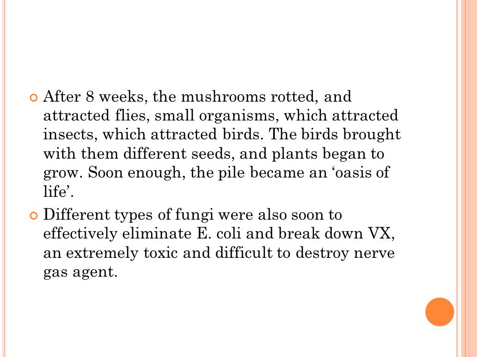 After 8 weeks, the mushrooms rotted, and attracted flies, small organisms, which attracted insects, which attracted birds. The birds brought with them