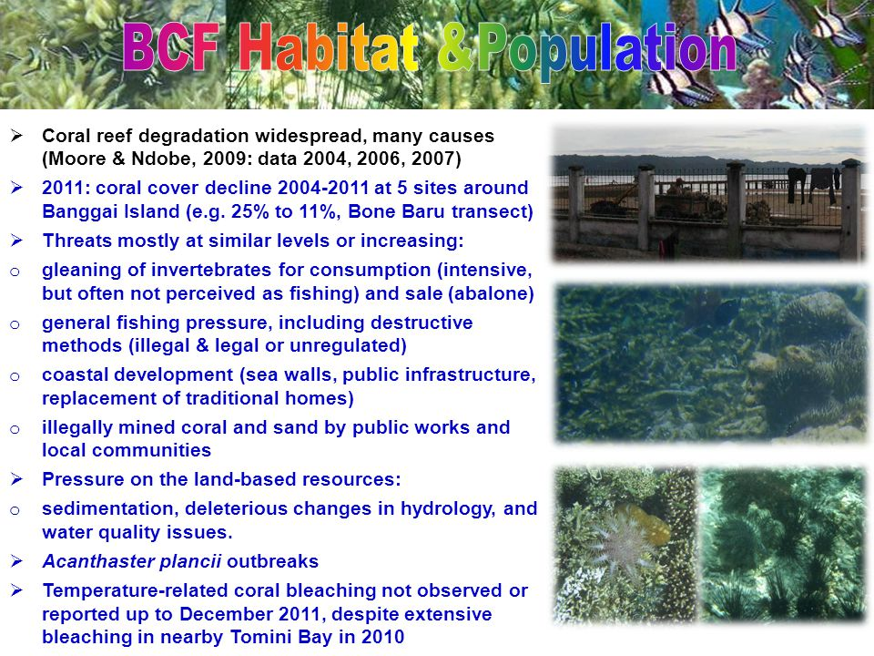  Coral reef degradation widespread, many causes (Moore & Ndobe, 2009: data 2004, 2006, 2007)  2011: coral cover decline 2004-2011 at 5 sites around