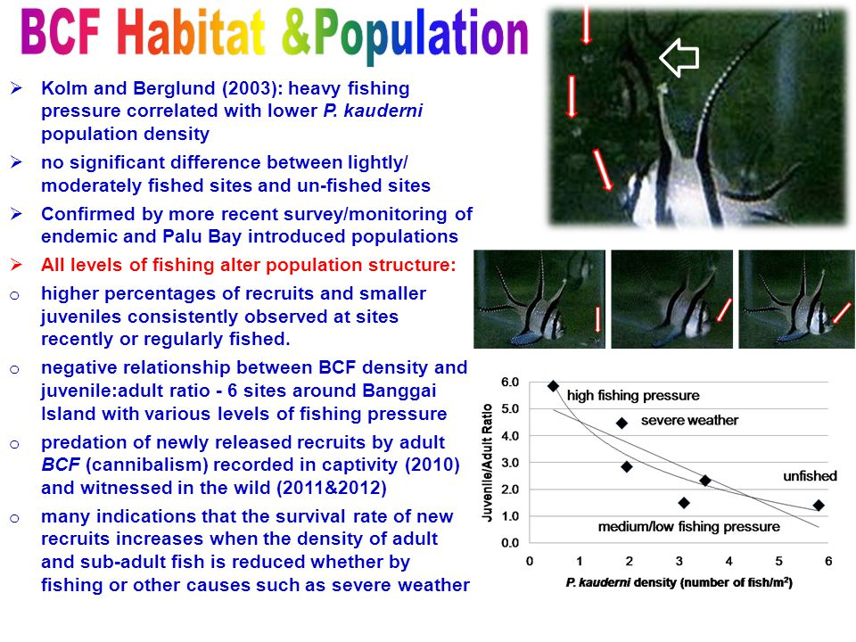  Kolm and Berglund (2003): heavy fishing pressure correlated with lower P. kauderni population density  no significant difference between lightly/ m