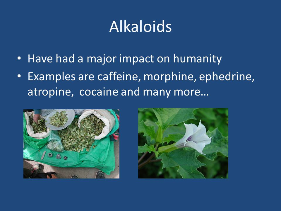 Have had a major impact on humanity Examples are caffeine, morphine, ephedrine, atropine, cocaine and many more…