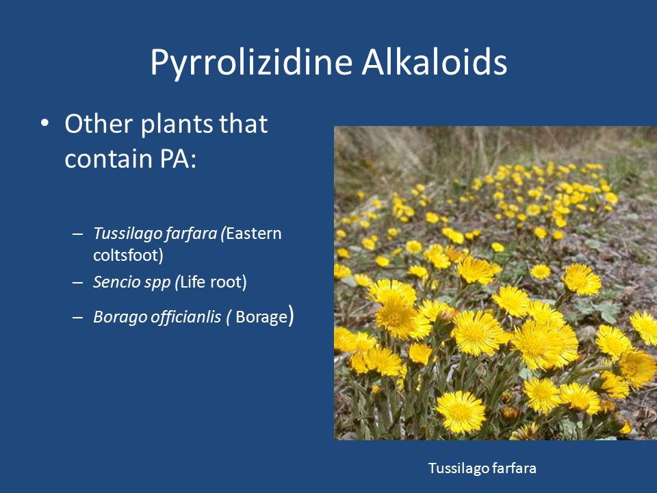 Pyrrolizidine Alkaloids Other plants that contain PA: – Tussilago farfara (Eastern coltsfoot) – Sencio spp (Life root) – Borago officianlis ( Borage )