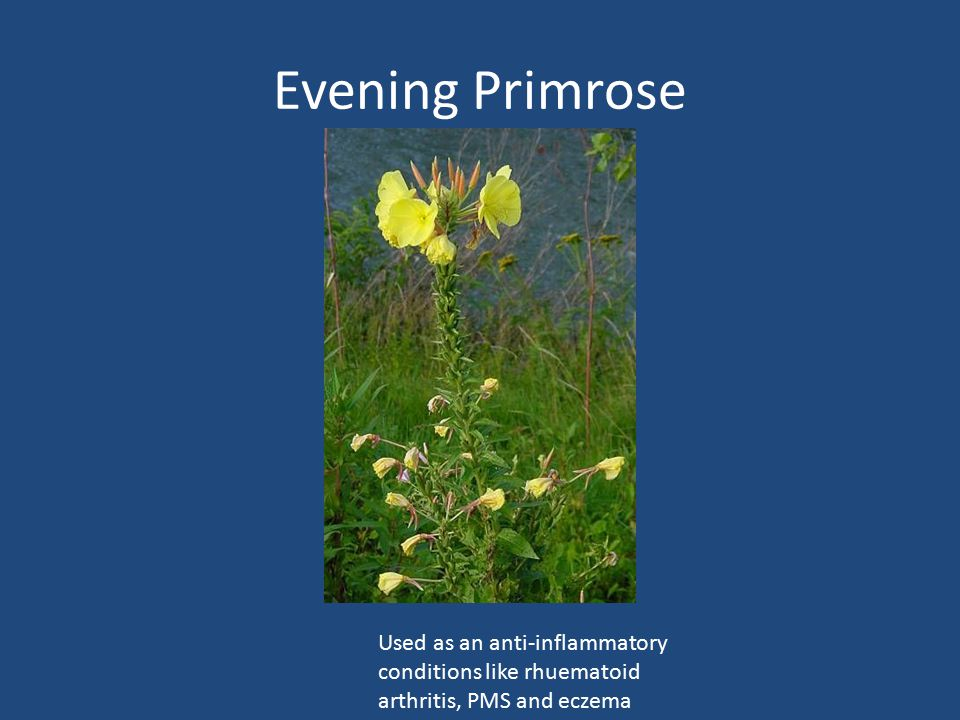 Evening Primrose Used as an anti-inflammatory conditions like rhuematoid arthritis, PMS and eczema