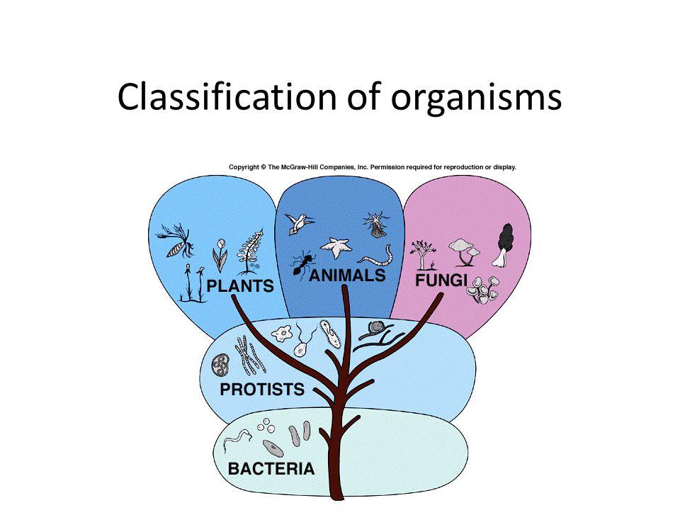 Protista Green Algae Chlamydomonas are single-celled organisms are aquatic, living in freshwater habitats.