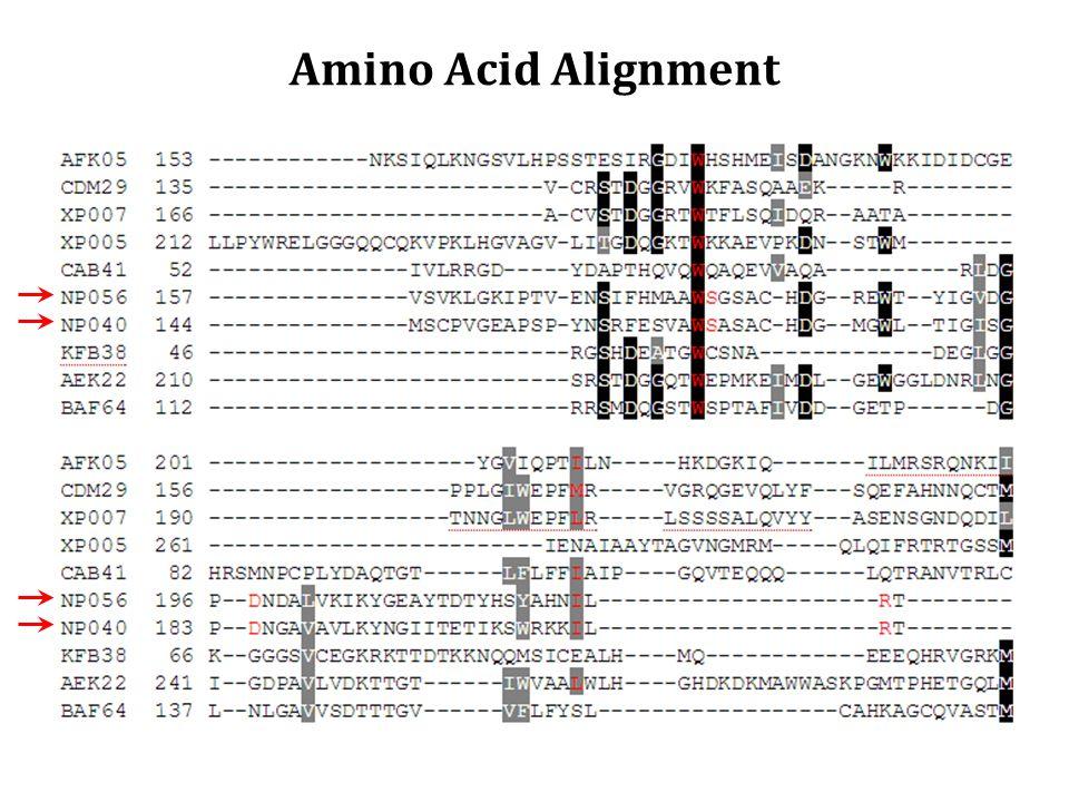 Amino Acid Alignment