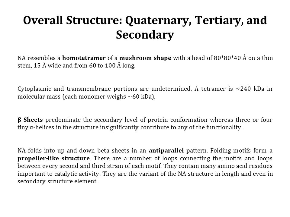 Overall Structure: Quaternary, Tertiary, and Secondary NA resembles a homotetramer of a mushroom shape with a head of 80*80*40 Å on a thin stem, 15 Å wide and from 60 to 100 Å long.